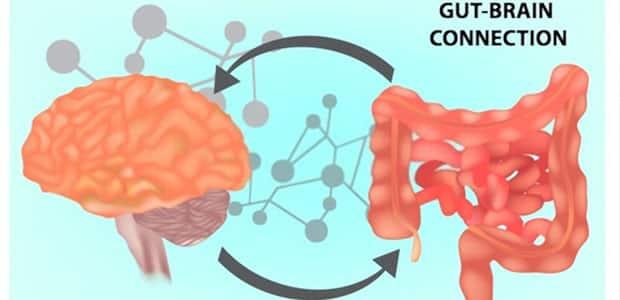 gut health & brain connection