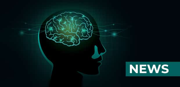 the Function of Brain and Memory