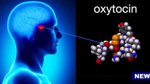 Love Hormone Oxytocin Could Be Used To Treat Alzheimer's Disease, According To Japanese Scientists