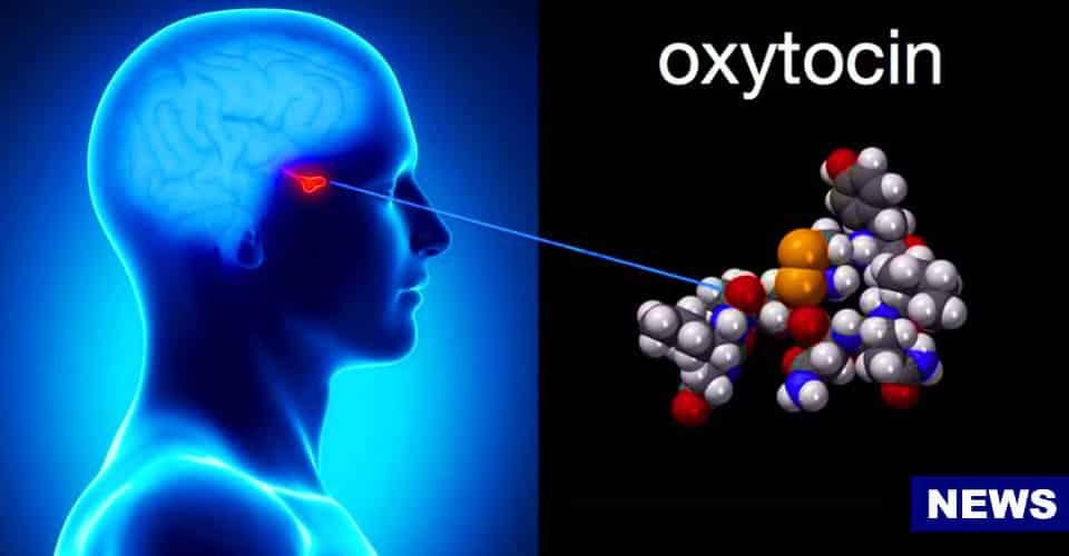 Love Hormone Oxytocin Could Be Used To Treat Alzheimer's Disease Scientists