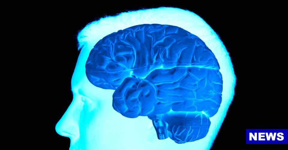 Brain News