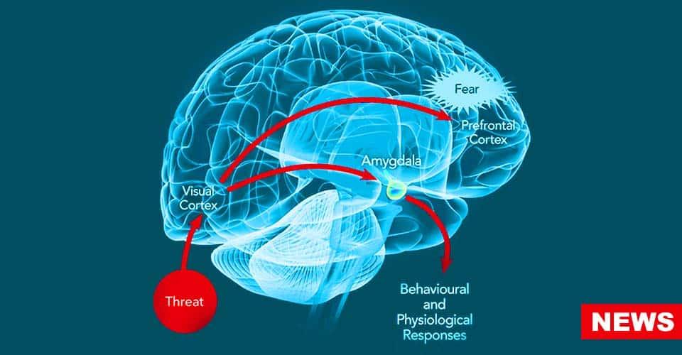 Neuroscientists Find Brain Circuit That Drives Anxiety