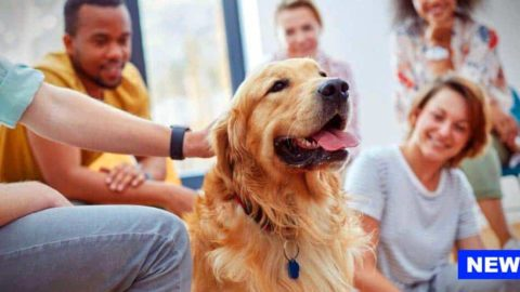 Therapy Dogs Improve Thinking Skills In Stressed-out Students, New Study Finds