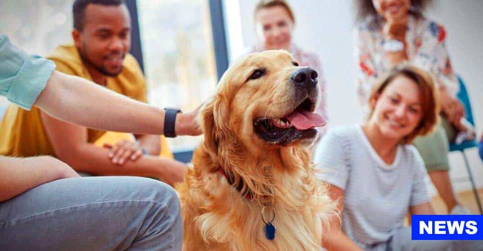 Therapy Dogs Improve Thinking Skills In Stressed-out Students