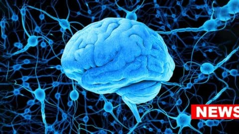 Scientists Find Histamine As A Potential Key Player In Depression