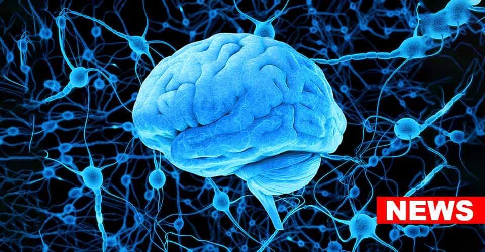 Histamine As A Potential Key Player In Depression
