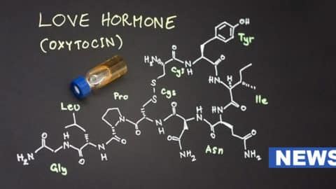 Love Hormone Can Reverse Stress-Induced Digestive Issues, Study Suggests