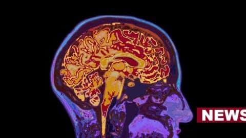 Scientists Find Mechanism That Creates False Memories In Our Brain