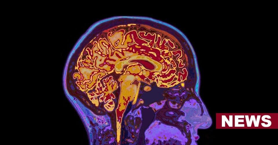 Mechanism That Creates False Memories In Our Brain
