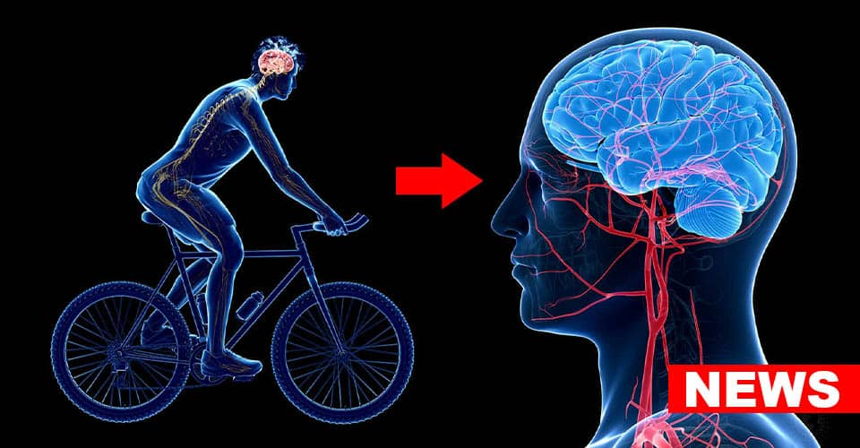 Scientists Confirm Dual Beneficial Effect of Physical Activity