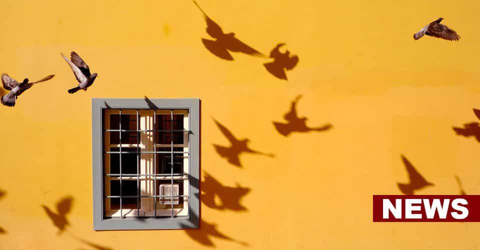 Bird Watching Near Home Improves Mental Health